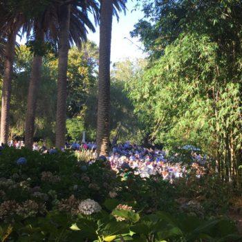 Concert-in-Convent-Garden 002